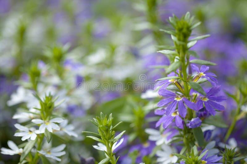 Fond floral naturel avec deux couleurs photographie stock libre de droits