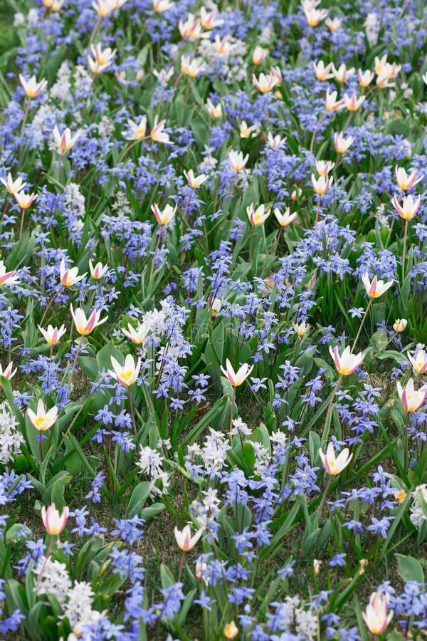 Fond floral naturel avec le foyer mou Beau pré d'été avec fleurir au printemps, macro, nature photographie stock