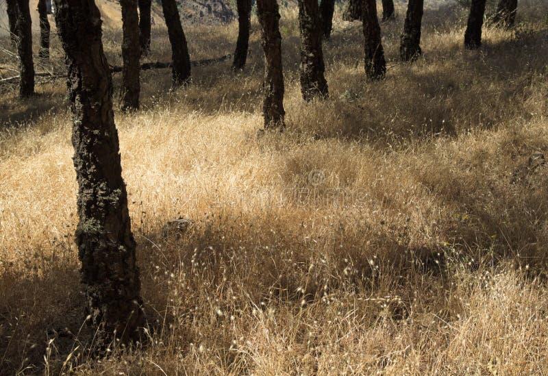 Fond floral naturel avec les herbes sèches photos stock