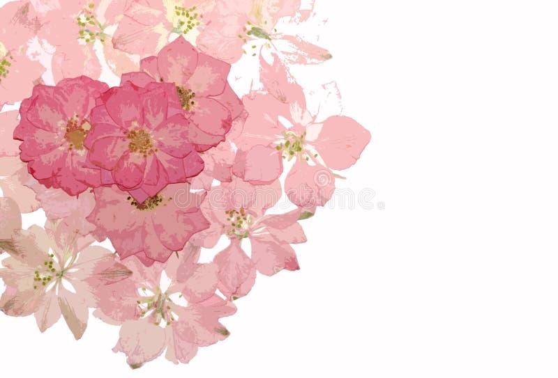 Fond floral rose photo libre de droits