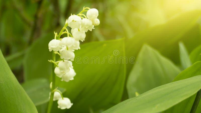 Fond floral floral Fond vert avec des fleurs photos libres de droits
