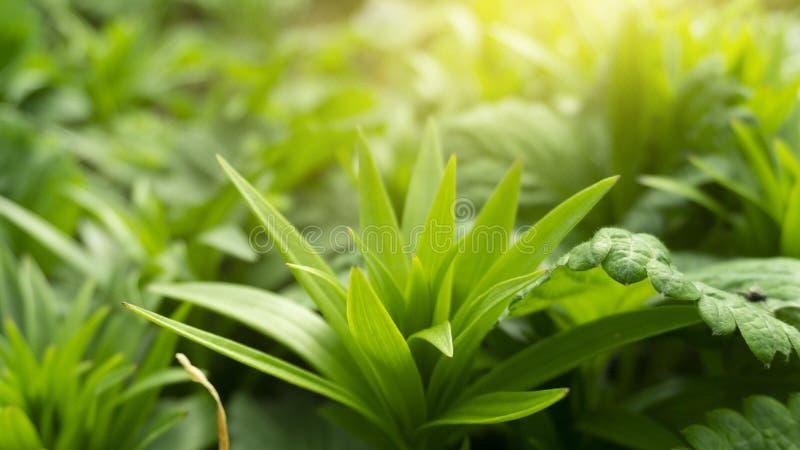 Fond floral floral Fond vert avec des fleurs photographie stock libre de droits
