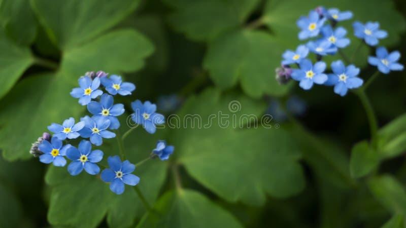 Fond floral floral Fond vert avec des fleurs photo stock