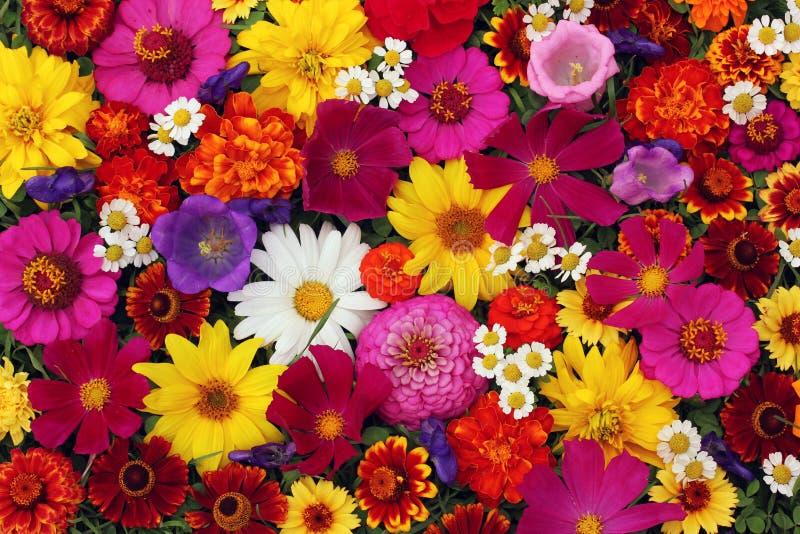 Fond floral, vue supérieure La texture du flo différent de jardin photo libre de droits