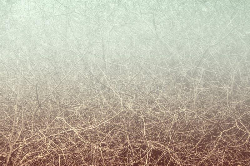 Fond flou de bosquet de bosquet For?t automnale image stock