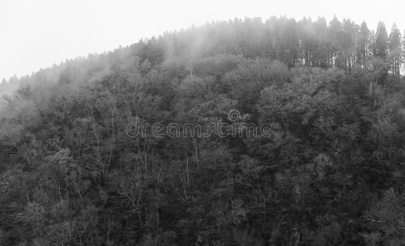 Fond foncé brumeux abstrait de forêt, monochrome photo libre de droits