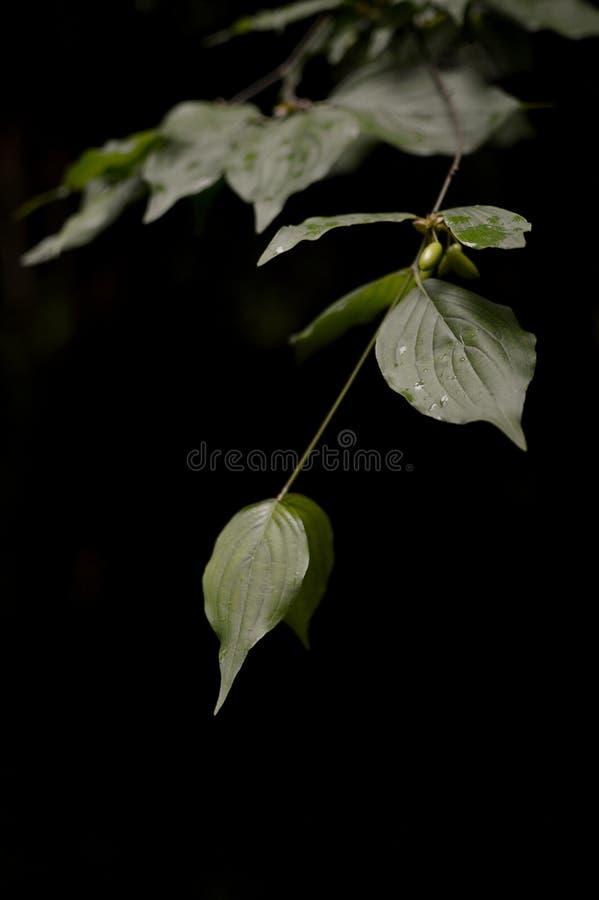Fond foncé de feuilles simples photos stock