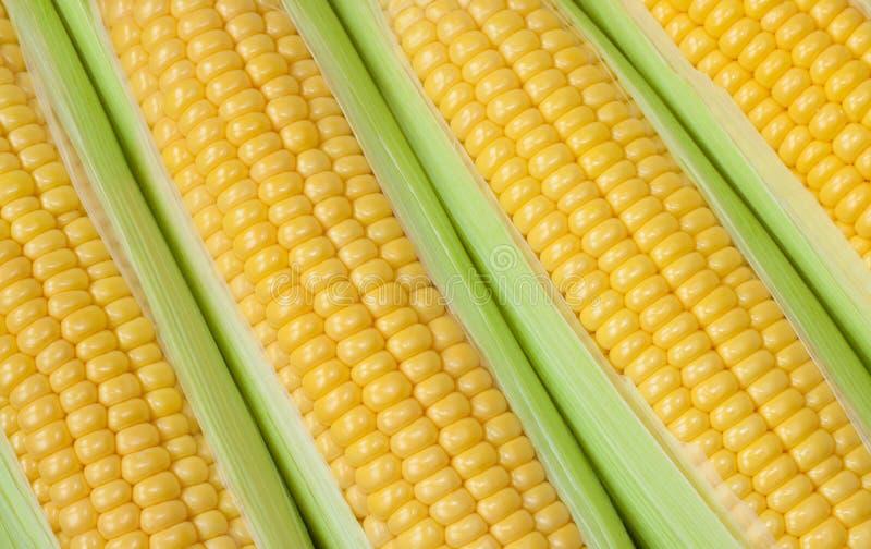 Fond frais d'épi de maïs photos libres de droits