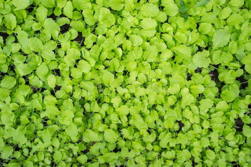 Fond frais de plantes vertes images stock