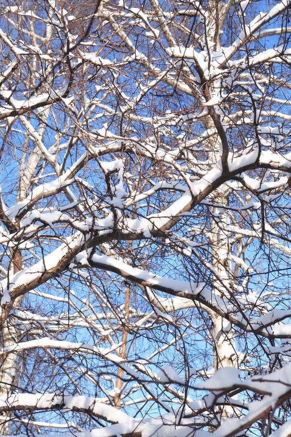 Fond gentil de l'hiver image stock