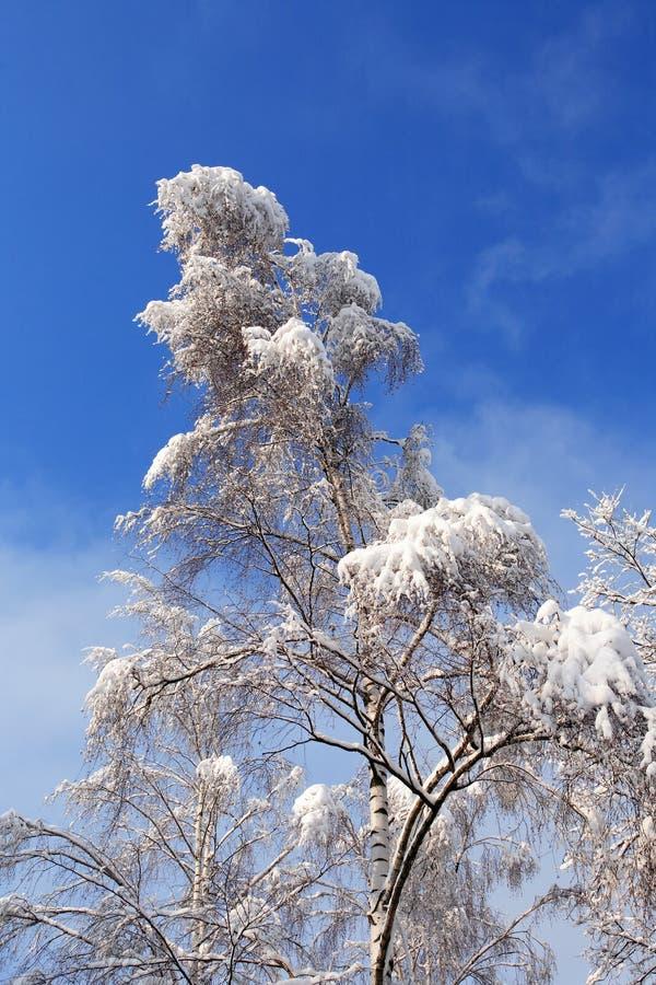Fond gentil de l'hiver photographie stock libre de droits