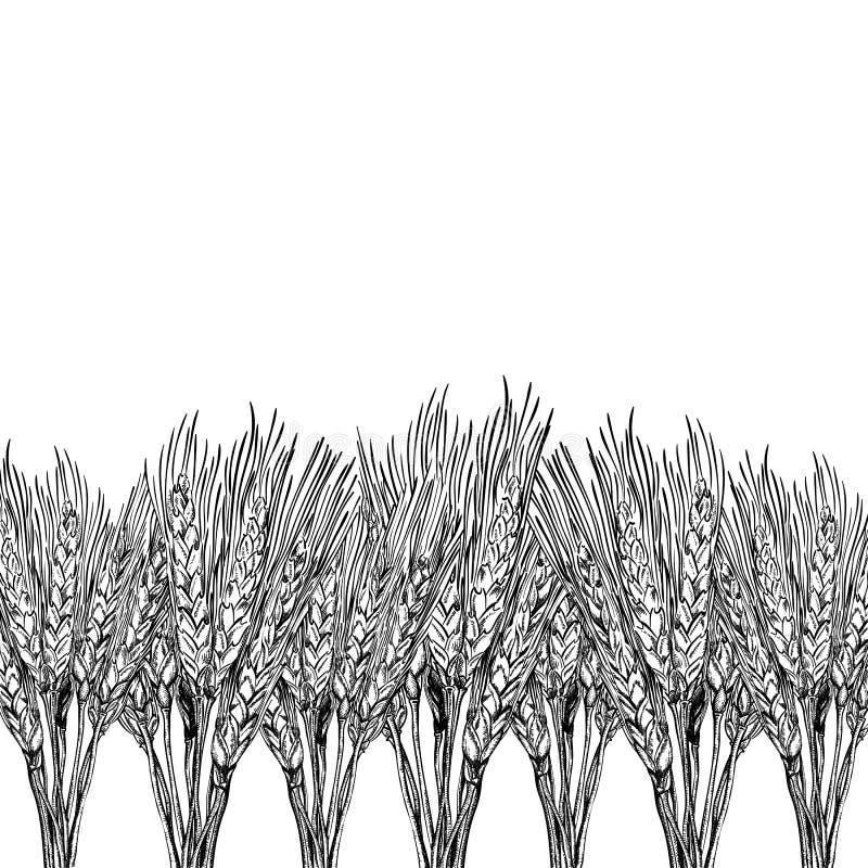 Fond gravé de blé illustration de vecteur
