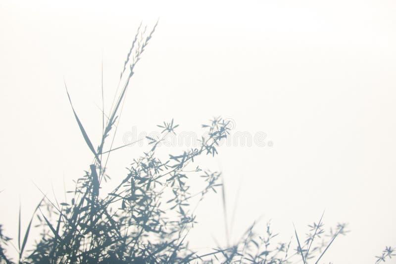 Fond gris abstrait d'ombre des feuilles naturelles sur la texture blanche pour le fond images stock