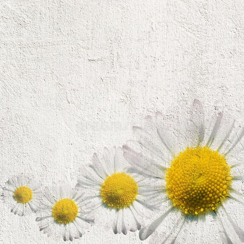 Fond grunge de fleur photographie stock