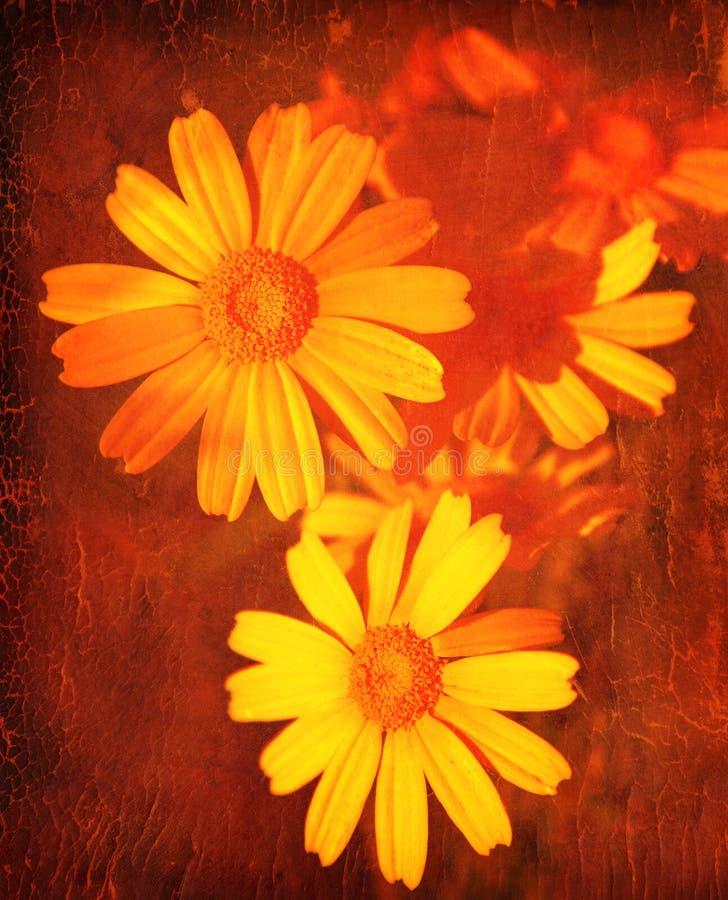 Fond grunge floral abstrait photographie stock libre de droits