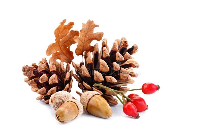 Fond heureux de jour d'action de grâces Fond blanc décoré des potirons, du maïs, des fruits et des feuilles d'automne Automne image libre de droits