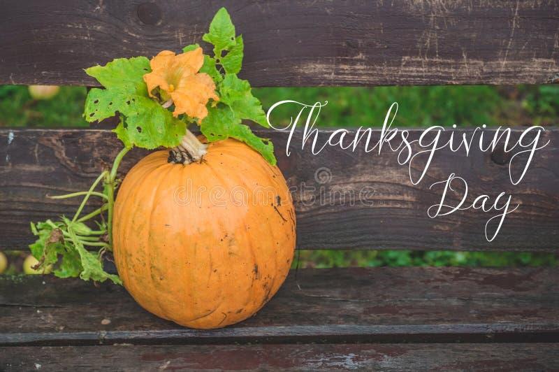 Fond heureux de jour de thanksgiving, table en bois décorée des potirons Bel automne de scène de concept de festival d'automne de photo libre de droits