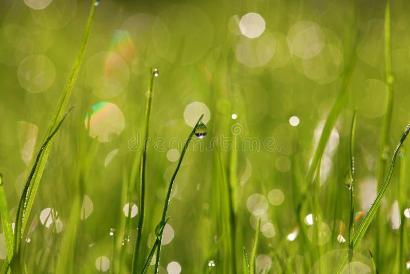Fond humide d'herbe photo libre de droits