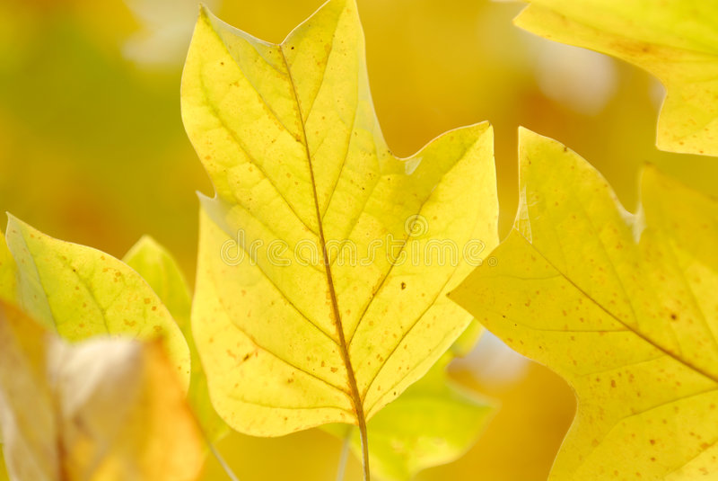 Fond jaune photo stock