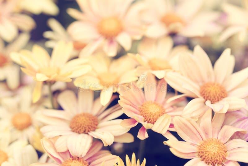 Fond jaune pâle de fleurs de vintage naturel photographie stock libre de droits
