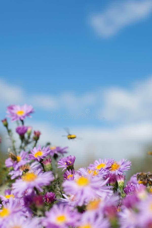 fond joyeux avec l'humeur espiègle et l'abeille photos libres de droits