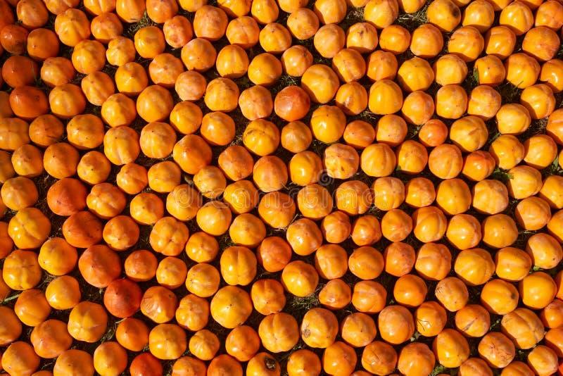 Fond juteux frais de fruit de kakis, plan rapproché, dehors photo stock