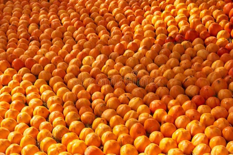 Fond juteux frais de fruit de kakis, plan rapproché, dehors photos stock