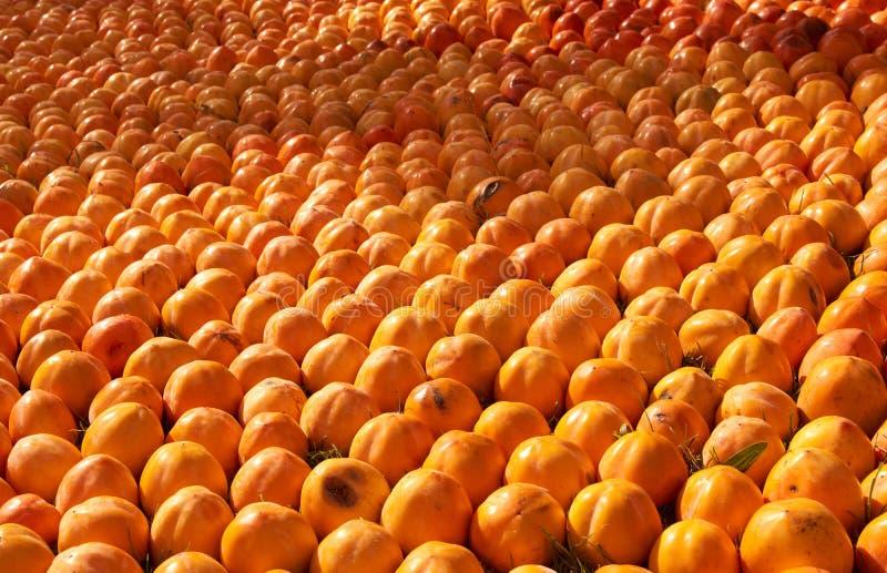 Fond juteux frais de fruit de kakis, plan rapproché, dehors image libre de droits