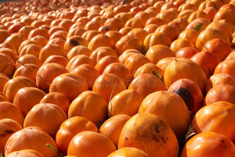 Fond juteux frais de fruit de kakis, plan rapproché, dehors photos libres de droits