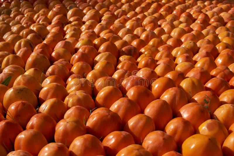 Fond juteux frais de fruit de kakis, plan rapproché, dehors image stock