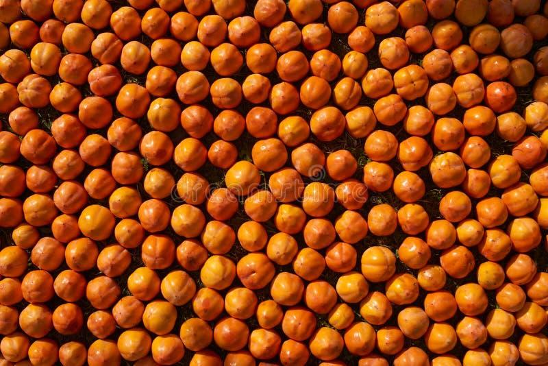 Fond juteux frais de fruit de kakis, plan rapproché, dehors photographie stock