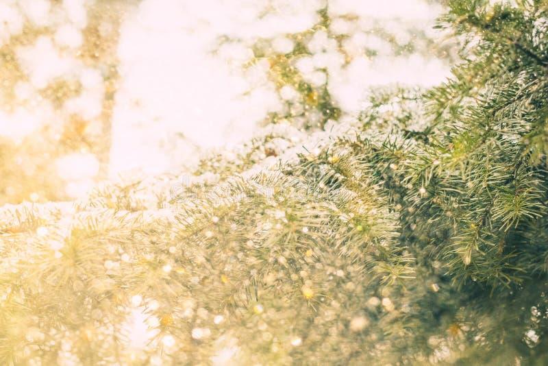 fond magique de Noël avec le bokeh d'or et les branches d'arbre à feuilles persistantes photos libres de droits