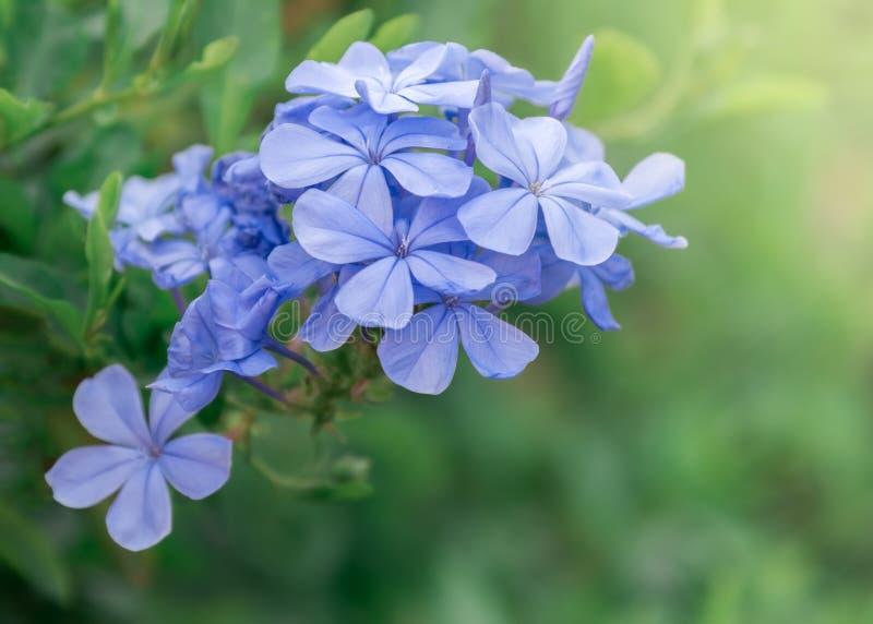 Fond mauve-clair de fleur photographie stock libre de droits