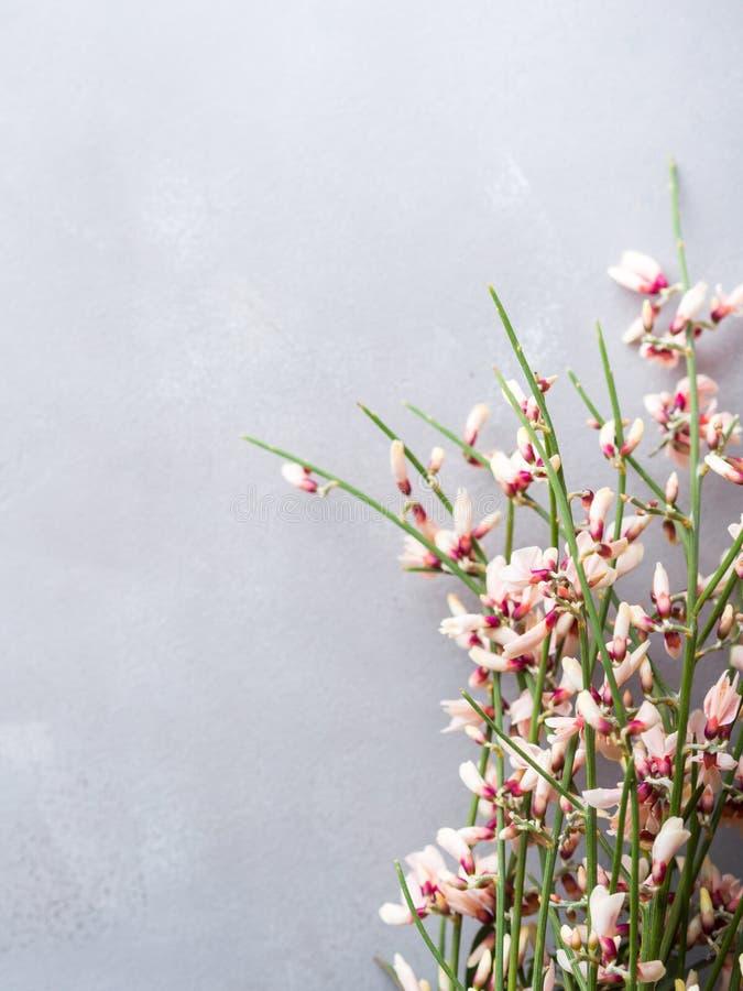 Fond minimal floral de couleur en pastel de balai de Pâques de ressort photos stock