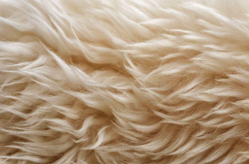 Fond mou blanc de texture de laine, ouate, laine naturelle légère de moutons, texture en gros plan de la fourrure pelucheuse blan photo libre de droits