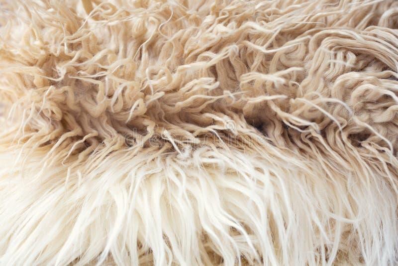 Fond mou blanc de texture de laine, ouate, laine naturelle l?g?re de moutons, texture en gros plan de la fourrure pelucheuse blan images libres de droits