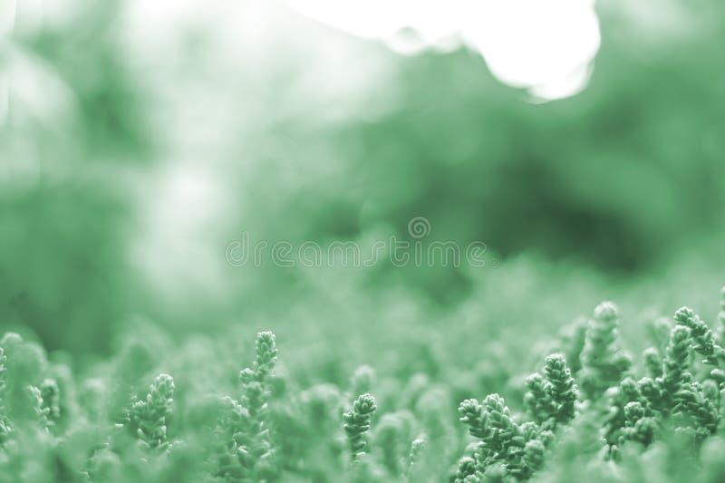 Fond mou brouillé d'été des usines brillant par le soleil avec l'effet de bokeh coloré dans la néo- couleur en bon état La couleu photographie stock