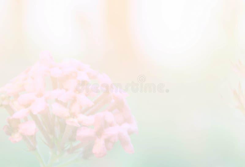 Fond mou d'abrégé sur fleur de transitoire de tache floue avec le filtre de couleur en pastel photographie stock libre de droits