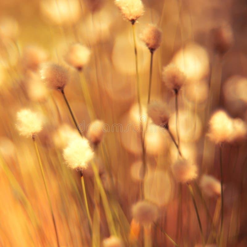 Fond mou d'usine d'herbe photos libres de droits