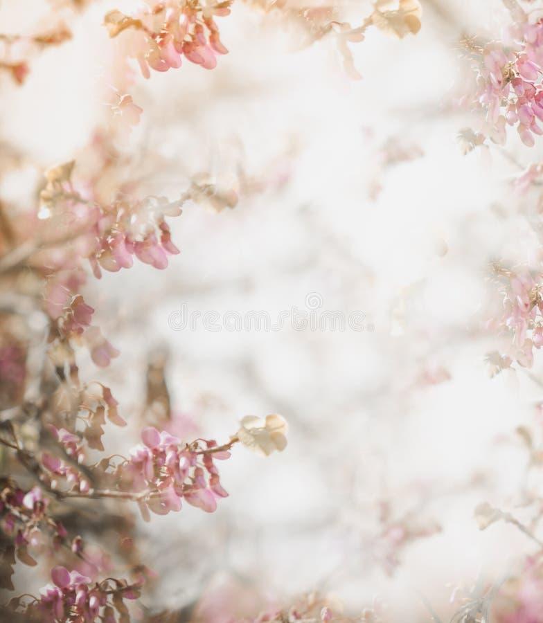 Fond mou de fleur dans le ton en pastel pour la valentine ou le mariage Fond de fleur de ressort de cru Calibre de conception de  photos stock