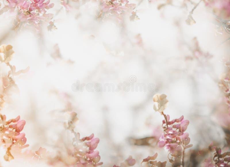Fond mou de fleur dans le ton en pastel pour la valentine ou le mariage Fond de fleur de ressort de cru Calibre de conception de  photographie stock
