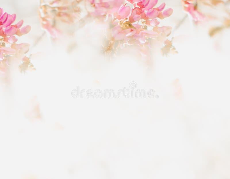 Fond mou de fleur dans le ton en pastel pour la valentine ou le mariage Fond de fleur de ressort de cru Calibre de conception de  image stock