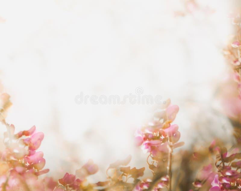 Fond mou de fleur dans le ton en pastel pour la valentine ou le mariage Fond de fleur de ressort de cru Calibre de conception de  photo libre de droits