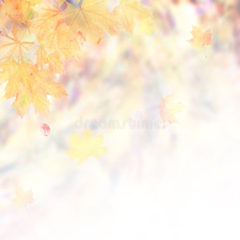 Fond mou de nature d'automne image stock
