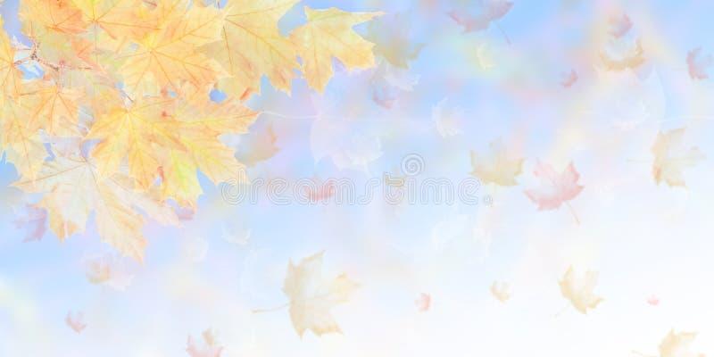 Fond mou de nature d'automne photo libre de droits