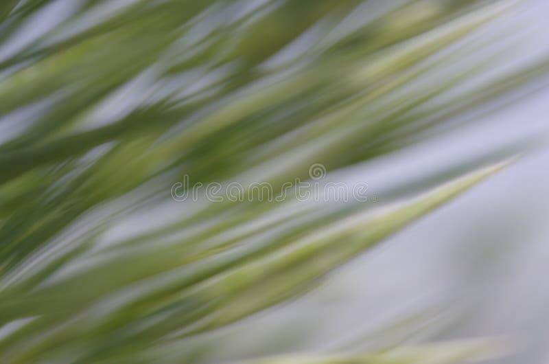 Fond naturel abstrait, vent photographie stock libre de droits