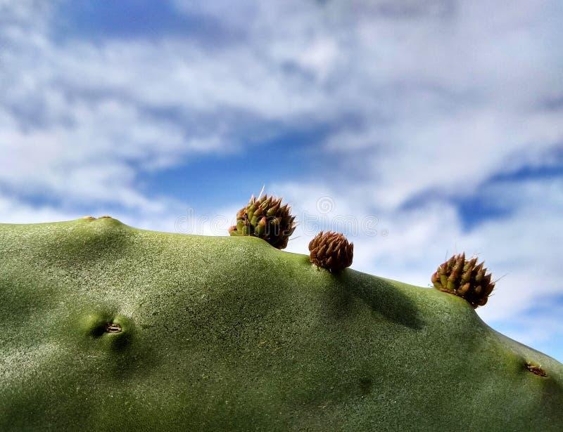 Fond naturel de cactus avec des fleurs image stock