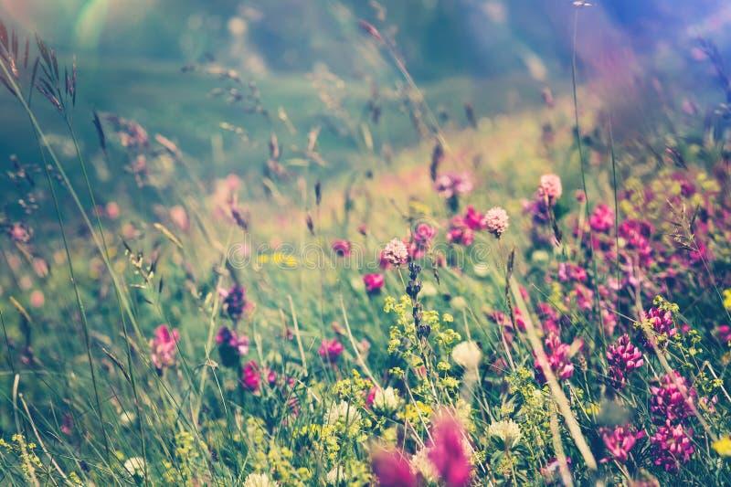 Fond naturel de floraison de saisons d'été de ressort de fleurs photo libre de droits