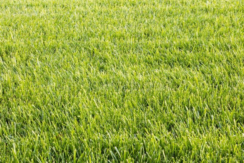 Fond naturel de nature de yard de paysage de pelouse de texture de coupe d'herbe verte photos libres de droits