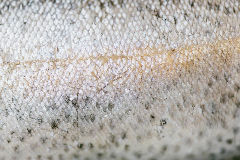 Fond naturel de peau de poissons image stock